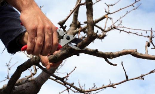 Κλάδεμα και διαμόρφωση των δέντρων
